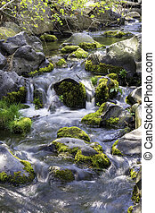 Water flows over rocks in a creek