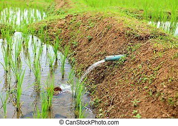 water for rice plant in farm of Thailand