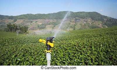 Water for tea fields on hillside plantation in Chiang Mai, ...