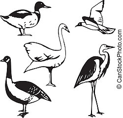 Water fowl - Five stylized vector illustrations of water ...