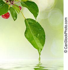 water, groene, druppel, blad