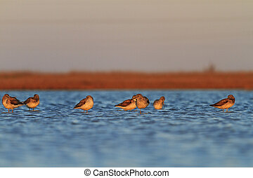 water, het rusten, groep, vogels