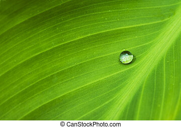 Water I - Waterdrop on a leaf