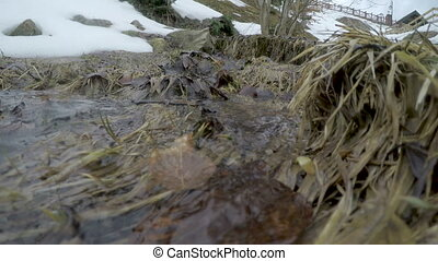 water in spring creek. - water in a spring creek. snow...