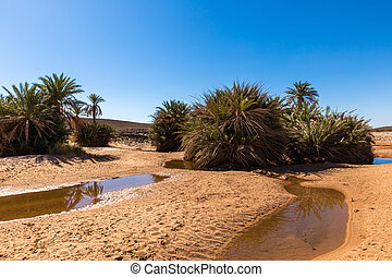 water in the oasis Sahara desert - water in the oasis,...