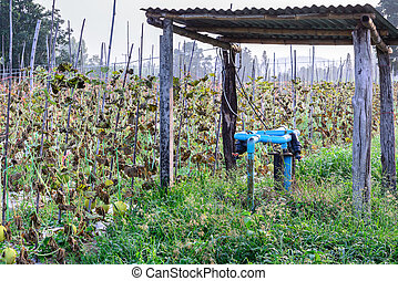 Water irrigation system on melon field.