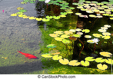 Water lilies and red fish in the pond inside the Sarona Garden, Tel Aviv, Israel