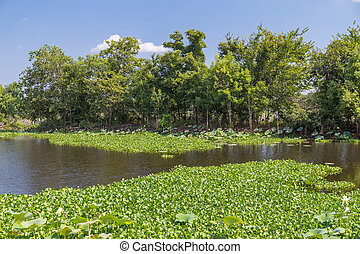 Water Lilies, grass, trees and other vegetation in Brazos ...