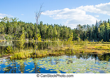 Water lilies in the forest pond