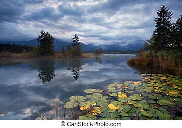 water lilies on lake Barmsee in clouded morning