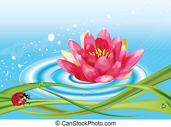 water lily and ladybug - Water lily on the surface of the ...