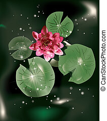 water lily and leaves