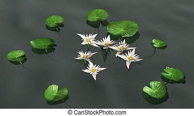 water lily flowers in calm water
