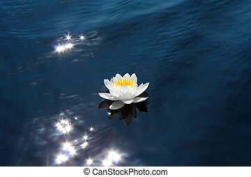 Water lily in the sunshine