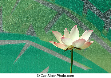 Water lily in window background