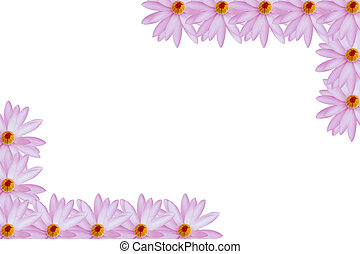 water lily isolated on white background