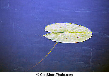 Water lily leaf in blue water, aged and worn vintage style...