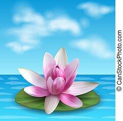 Water Lily, Nenuphar, Spatter-dock, Pink Lotus on Green Leaf. Flower Exotic
