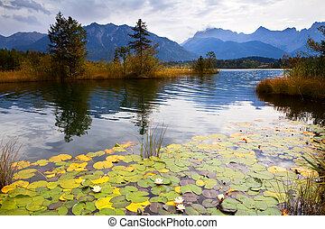 water lily on Barmsee in Alps