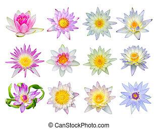 Water lily or lotus flower set 12-2