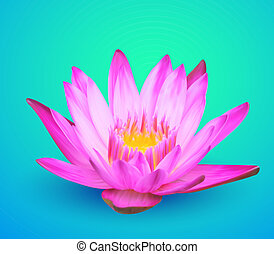 Water lily vector flower illustration