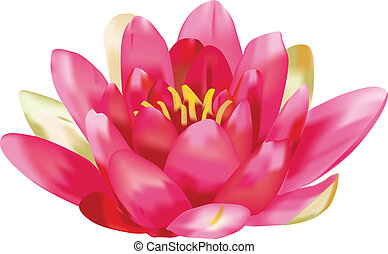 Water lily vector isolated on white background