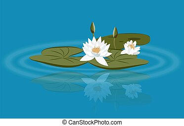 Water lily vector on the lake with leavs and flower buds