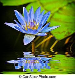 water lotus - Beautyfull water lotus and sun light with...