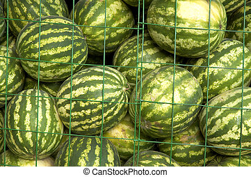 water-melons on the market