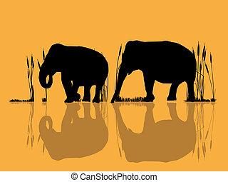 water, olifanten