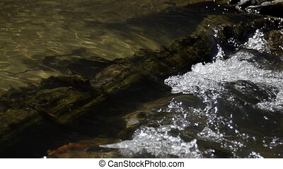 Water over submerged tree - Water in a stream flows over...