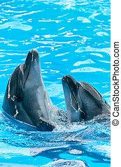 water, paar, light-blue, dolfijnen, dancing