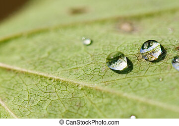 water plant, druppels