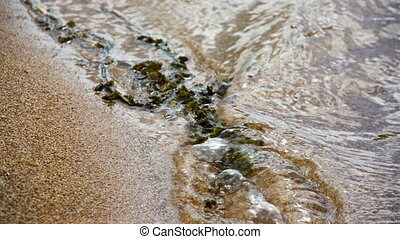 Water plant in sand and waves. Shot to RAW, wide dynamic range