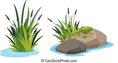 Water plant on white background