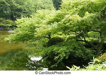 Water pond, plant, tree in Japanese zen garden