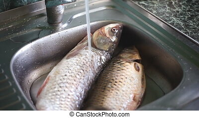 Water pouring over two bream fishes in kitchen sink - washing market food before cooking
