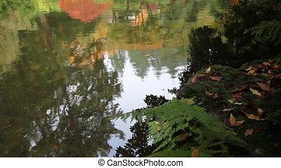 Water Reflection in Fall in Garden
