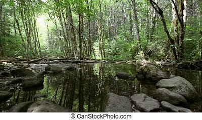 Water Reflection of Trees in Oregon