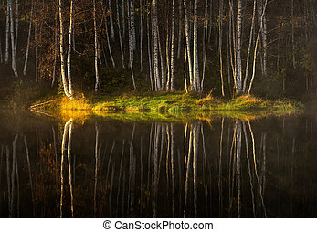 Water reflections of autumn tree