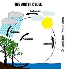 water, repesentatie, cyclus, schematisch, natuur