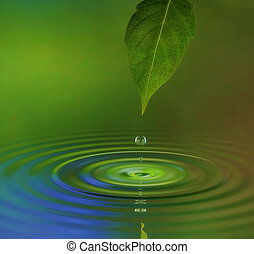 Water Ripple - A water drop from a leaf causing a ripple on...
