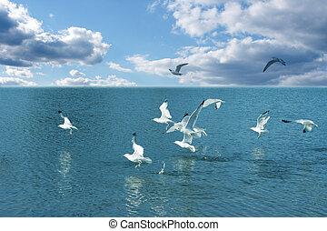 water, seagulls