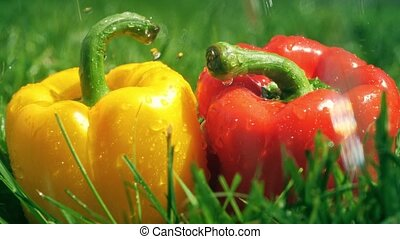 Water splashes on red and yellow sweet peppers, slow motion...