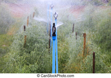 water splashing from outdoor sprinkler in agriculture plantatio