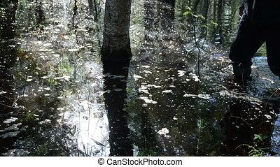 water spray tree