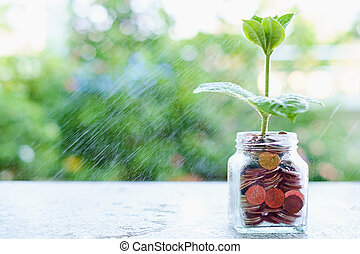 Water spraying the plant growing from coins in the glass jar on blurred green natural background