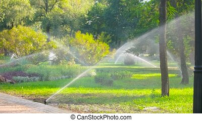 Water sprinkle system in the park lawn. Automatic irrigation...