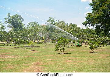 Water sprinkler in Garden