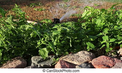 Water sprinkler spraying in garden